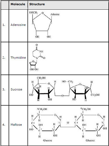 Biomolecules ncert solution class 11 Biology